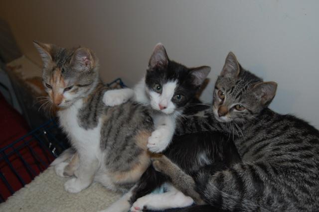 4 chatons (Mélisse, Vanille, Cacao, Saphran) Dsc_0115