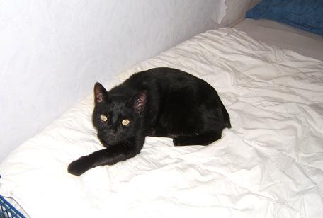 Nello, chat noir de 9 ans, queue coupé Chats_10