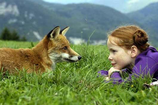 Le renard et l'enfant Renard13