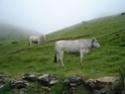 6 jours dans les Pyrénées Dsc00715