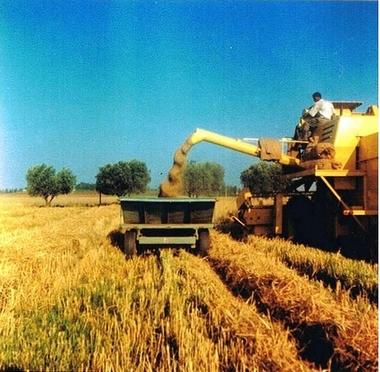 Fermes Agricoles, Viticoles, Région de Meknès Lucien19