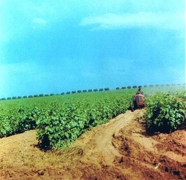 Fermes Agricoles, Viticoles, Région de Meknès Lucien20