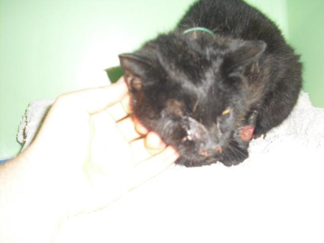 L'histoire d'un chat errant, d'un chat dont peu se soucis...un loulou entre la vie et la mort 01910