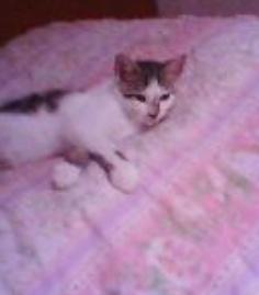Mon petit Davy, 5/6 mois Davy_b10