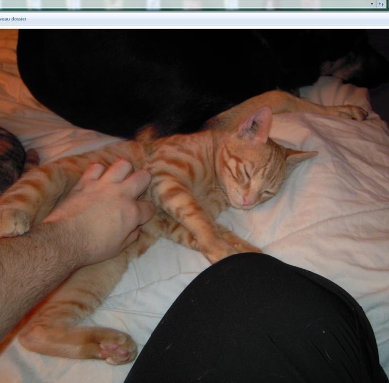 Mr Abricot, petit amour sur patte, boîte à ronron en puissance Mr_abr22