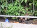 TRES URGENT FA POUR UN LOULOU DANS CITE QUI MALTRAITE 11810