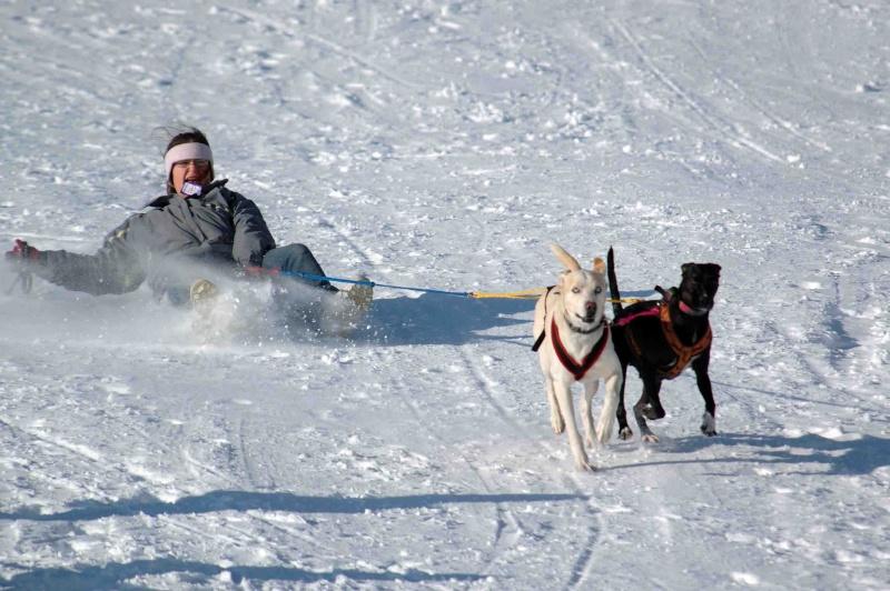 """Le team """"des chiens, des sport, une seule passion"""" Dsc_3510"""