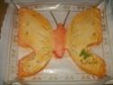 papillon - Page 2 20-09-10