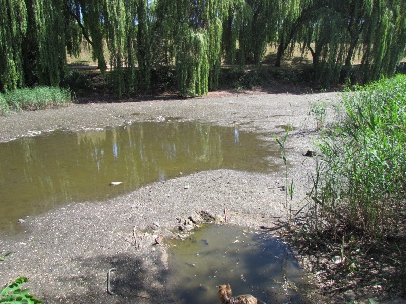 ils ont pollué, mon lac.......... - Page 2 Mlko_510