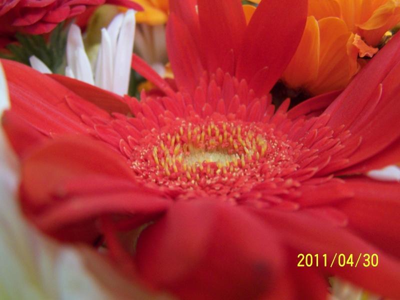 Coeur de fleurs/petites bêtes aussi - Page 4 Mondev22