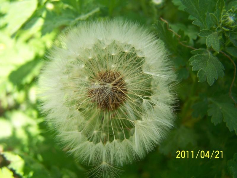 Coeur de fleurs/petites bêtes aussi - Page 4 Mondev23