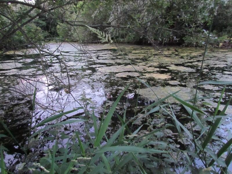 ils ont pollué, mon lac.......... - Page 3 Sor_410