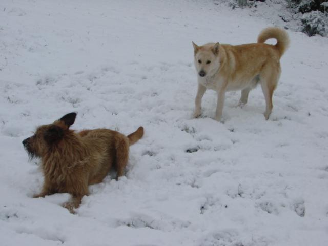 Le temps à Madelonnet du mois de décembre 2007 125
