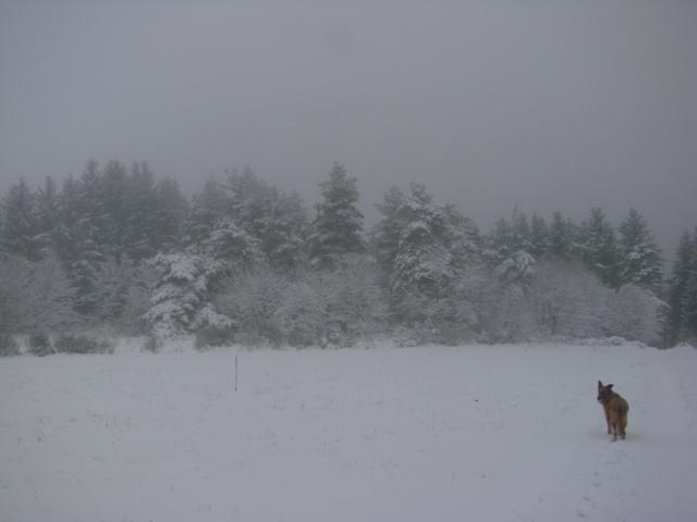 Le temps à Madelonnet du mois de décembre 2007 511