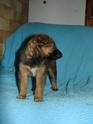 Le temps à Madelonnet du mois de décembre 2007 2007_130