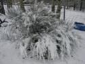 Le temps à Madelonnet du mois de décembre 2007 2007_152