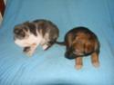 Le temps à Madelonnet du mois de décembre 2007 2007_169