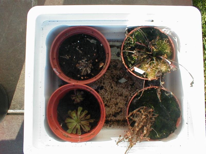mes petite plantes P1010016
