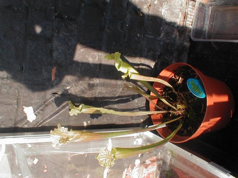 mes petite plantes P1010018