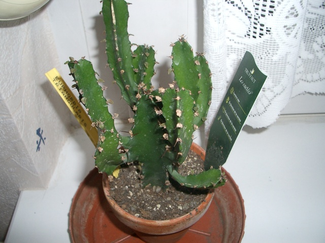 Mon cactus Imgp2411