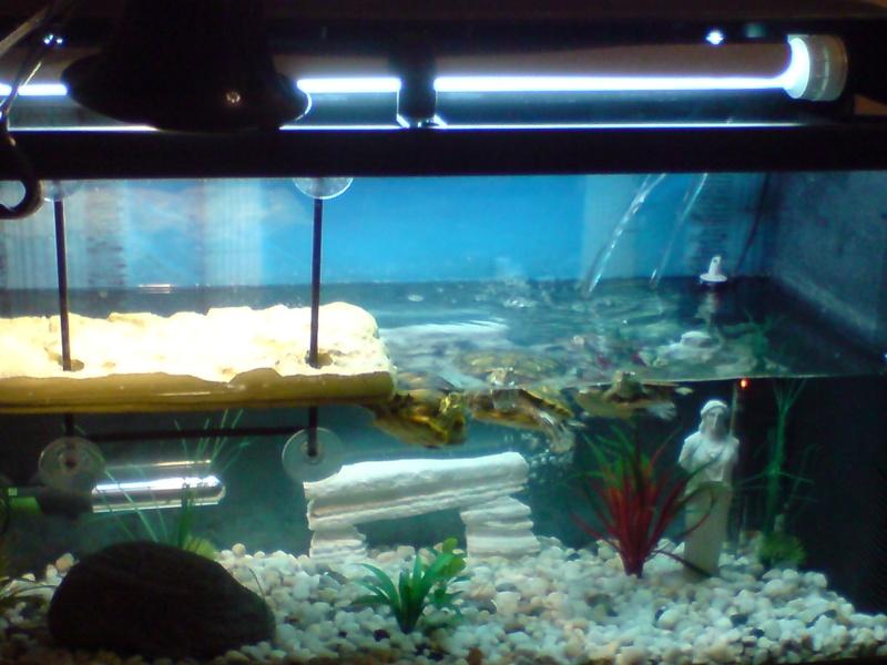 Voila Mon Nouvelle Aquarium 100l