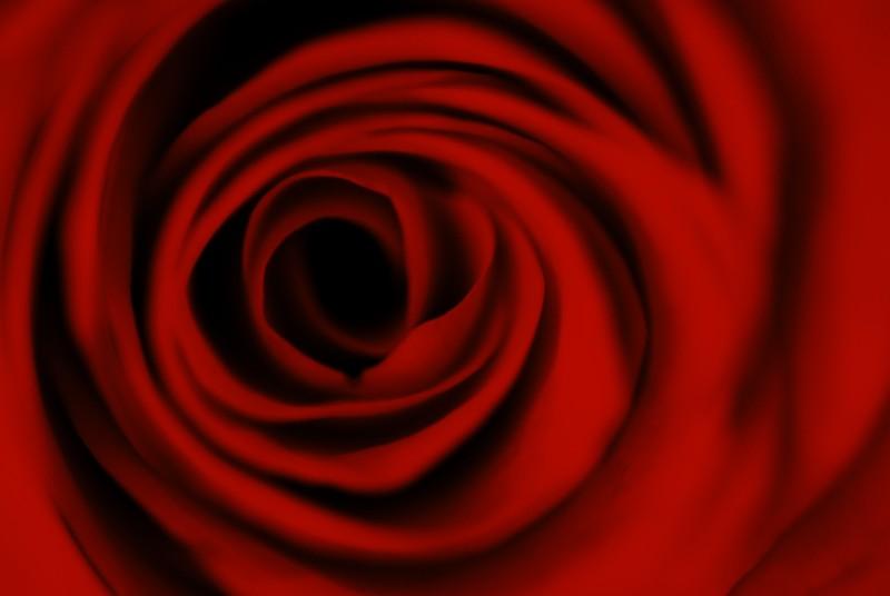 Le fil Rouge - Page 6 Rose10