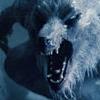 Vampires VS Lycans || Lycan610