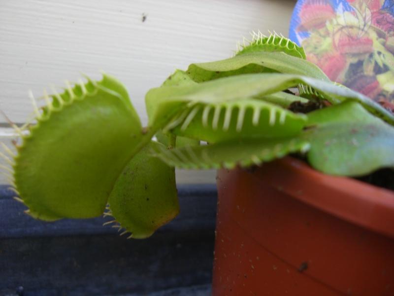 mes petite plantes ^^' Cimg4115