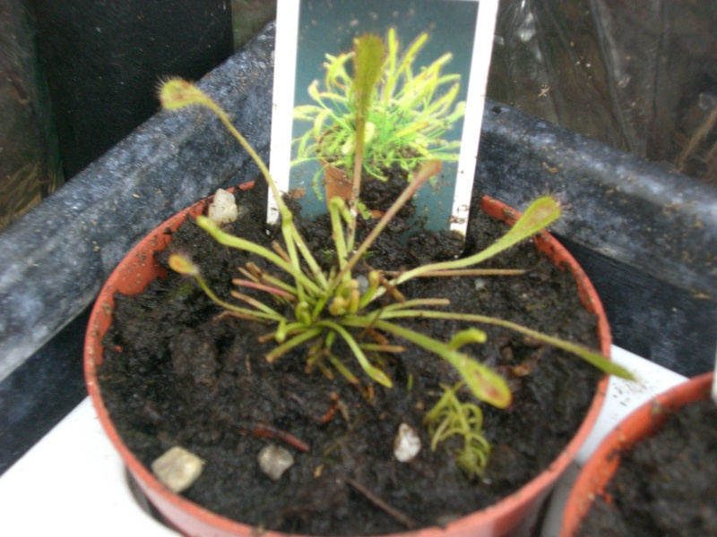 mes petite plantes ^^' Cimg4116