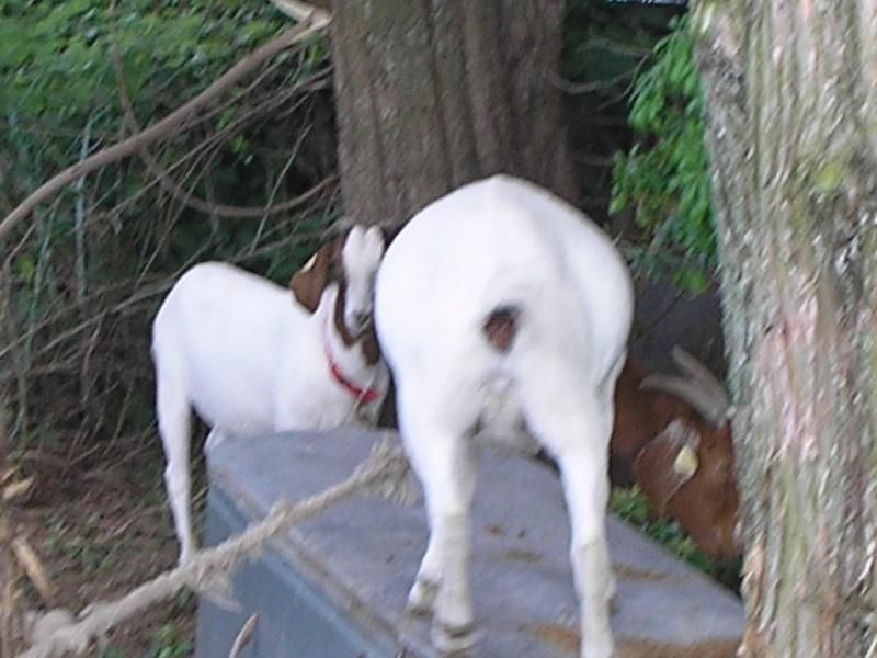 Queen's Random animal pics XD P7210013