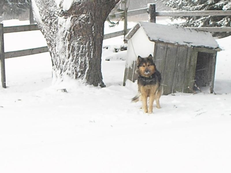 Snow Pc150013