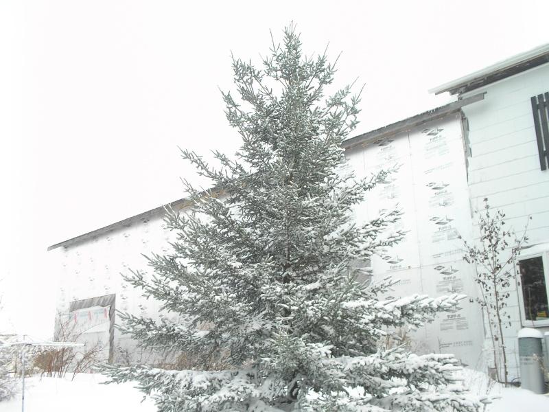 Snow Pc150016