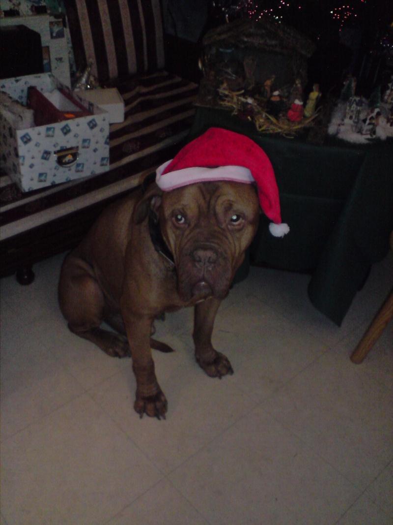 même les chiens fêtent Noël ! P0812012
