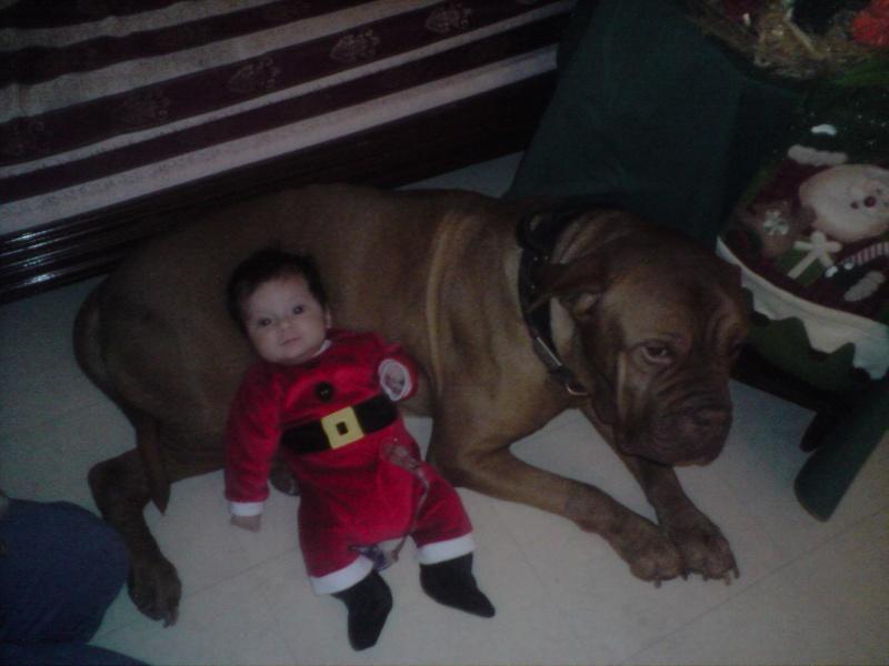même les chiens fêtent Noël ! P0812013