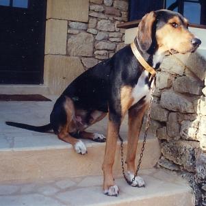 le beau Saphir a disparu depuis le 9 novembre Saphir10