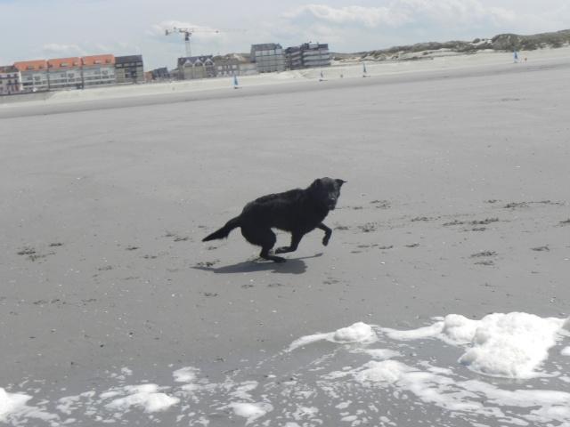 Tango, Croisé Labrador noir de 2 ans (castré) Dscn1710
