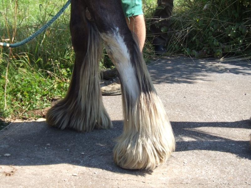 Bentley de la vallée du Lomont (News page 5) 2007_012