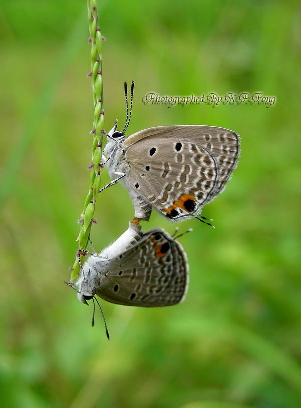 Butterfly...... XD Dscn5211