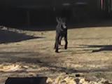 Animale de casa 02-12-11