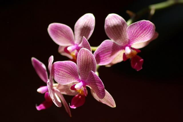 floraisons des orchidées Imgp2316