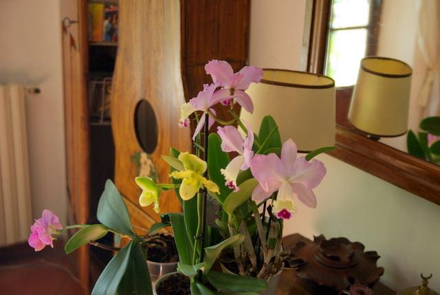 floraisons des orchidées Imgp2450