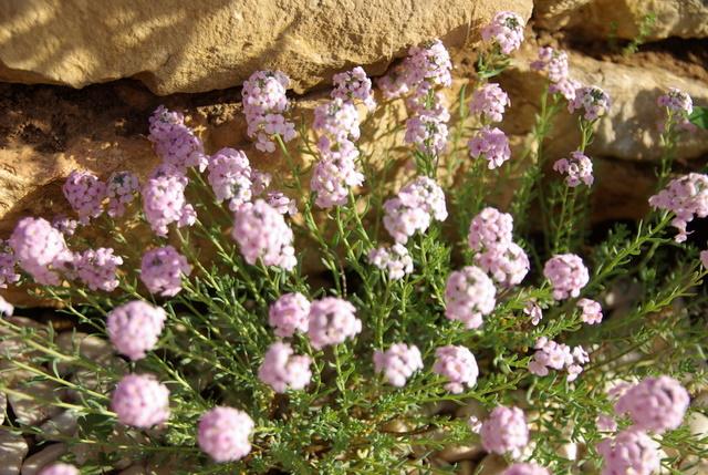 Floraisons du mois d'avril - Page 2 Imgp2920