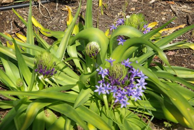 Floraisons du mois d'avril - Page 2 Imgp3020