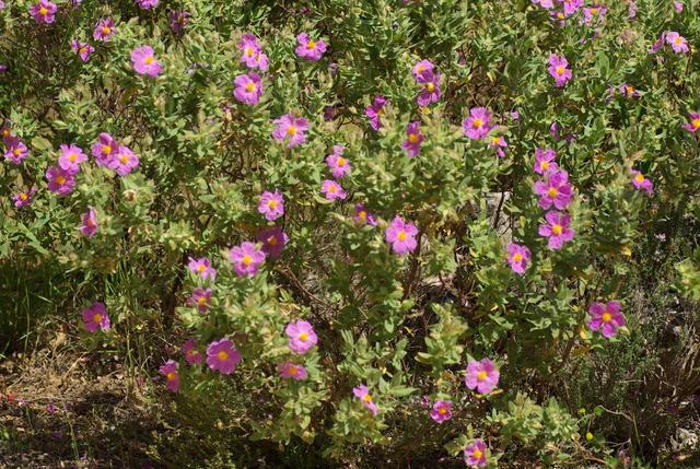 les plantes qui poussent dans ma région Imgp3063