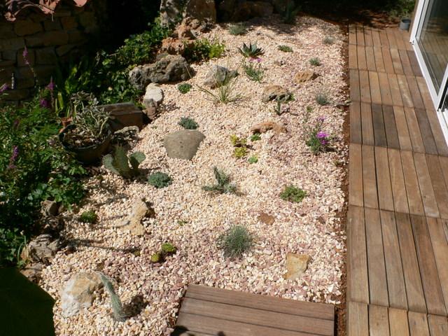 Floraisons de succulentes et cactées P1010810