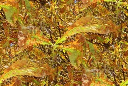 Décors d'automne 33210