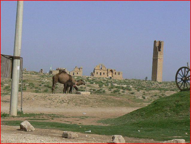 VOYAGE 2011 EN TURQUIE Harran11