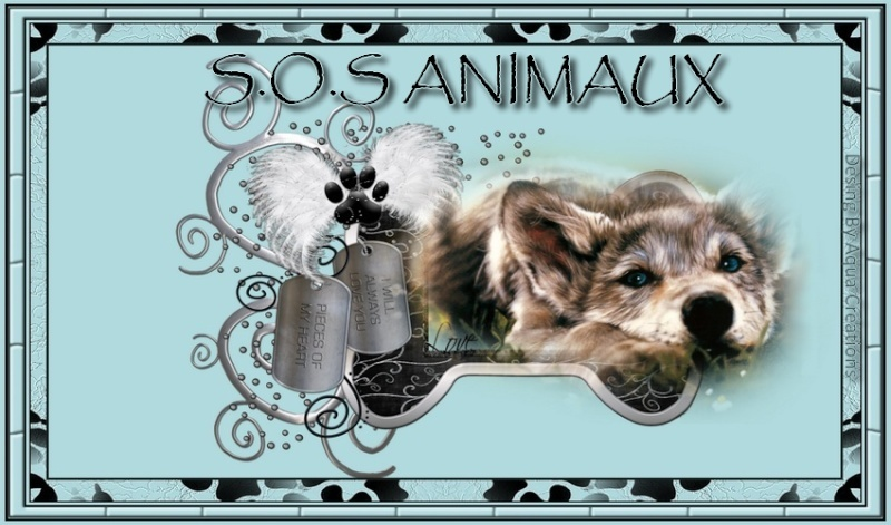 S.O.S  Animaux