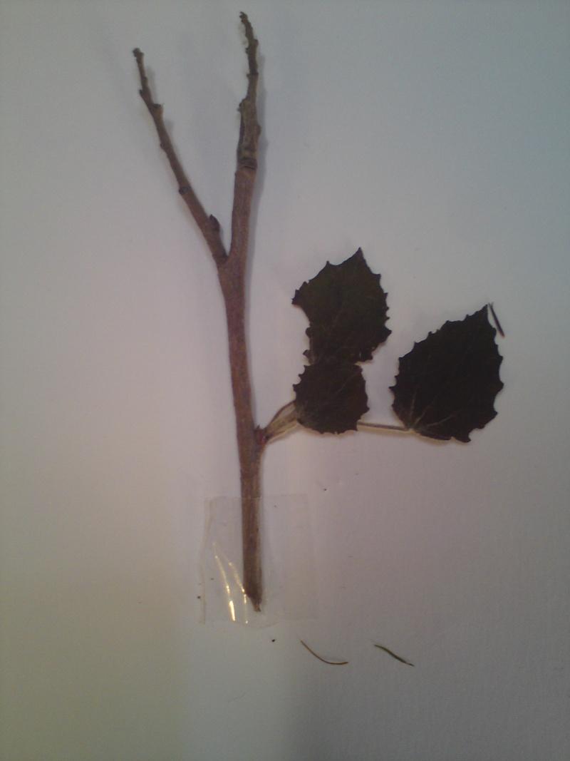 Mon herbier mystérieux Dsc00611