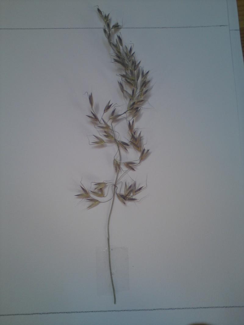 Mon herbier mystérieux Dsc00615